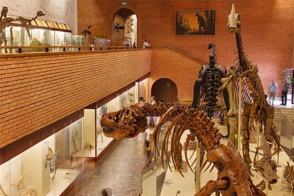 Палеонтологический музей приглашает шахматистов на открытый турнир